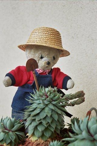 cactus qui pousse