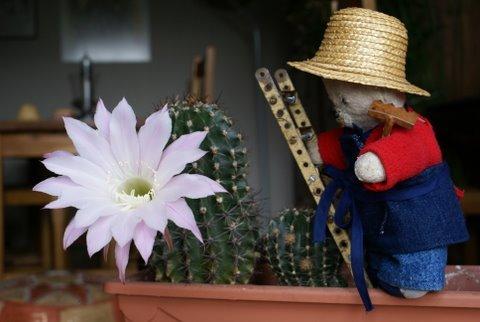 même les cactus !!!