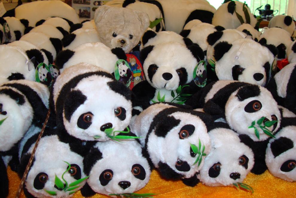 500 milions de pandas