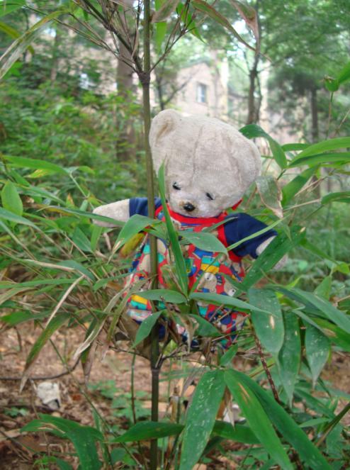 bambou 3