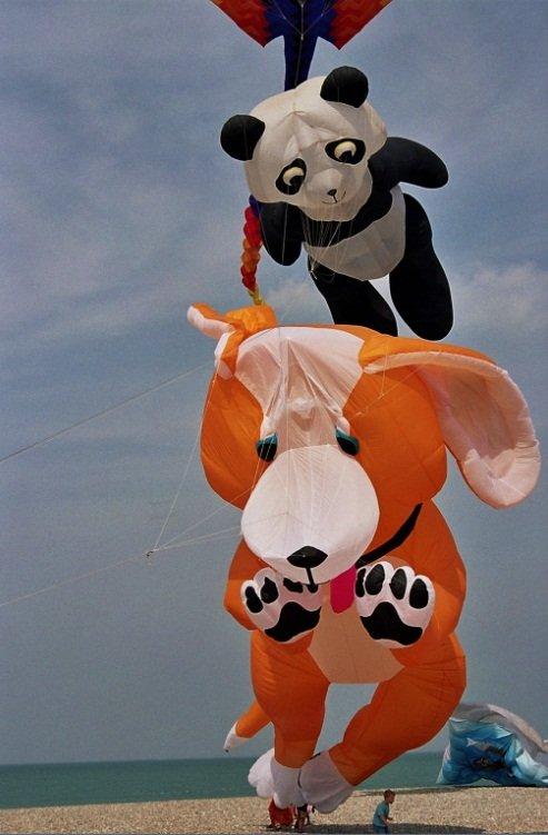 Chien et Panda