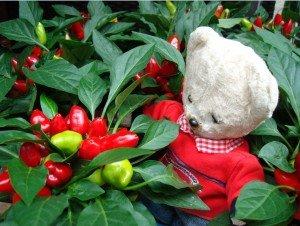 Ninnin jardinier : saison 2 dans jardin 0-300x226